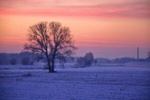 -winter-landschap---sneeuw